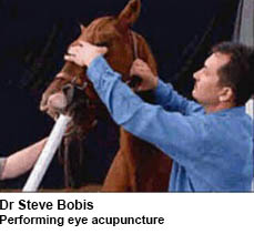 Dr Steve Bobis Eye Acupuncture